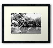 Pax Naturae Framed Print
