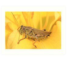Yellow and Grasshopper Art Print