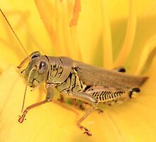 Yellow and Grasshopper by Gary Horner