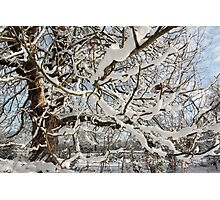 Tree covered in snow Photographic Print