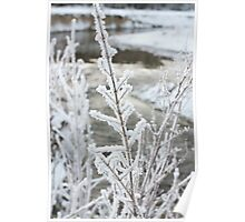 River view covered in snow Poster