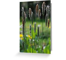 Summer Grasses Greeting Card