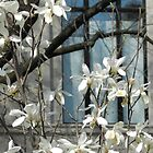 Metropolitian Blooms - New York City by Marijane Moyer  Morsett