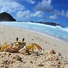 A Crab's World by Nate Zeman