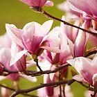 Iron Magnolia by seawhisper