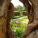 Peek at the Garden by Vicki Spindler (VHS Photography)