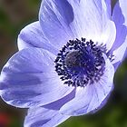 Anenome by Colin Metcalf