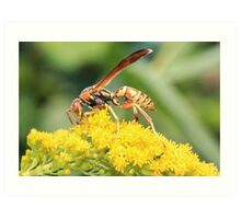 Yellow Wasp and Flower Art Print