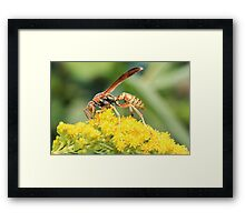 Yellow Wasp and Flower Framed Print