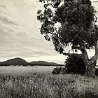 The Lone Tree by Sean Farrow