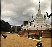 Temple mutts, Chiang Mai, Thailand by Catherine Ames