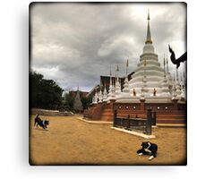 Temple mutts, Chiang Mai, Thailand Canvas Print