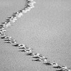 Make Tracks, Emberton, Buckinghamshire by strangelight