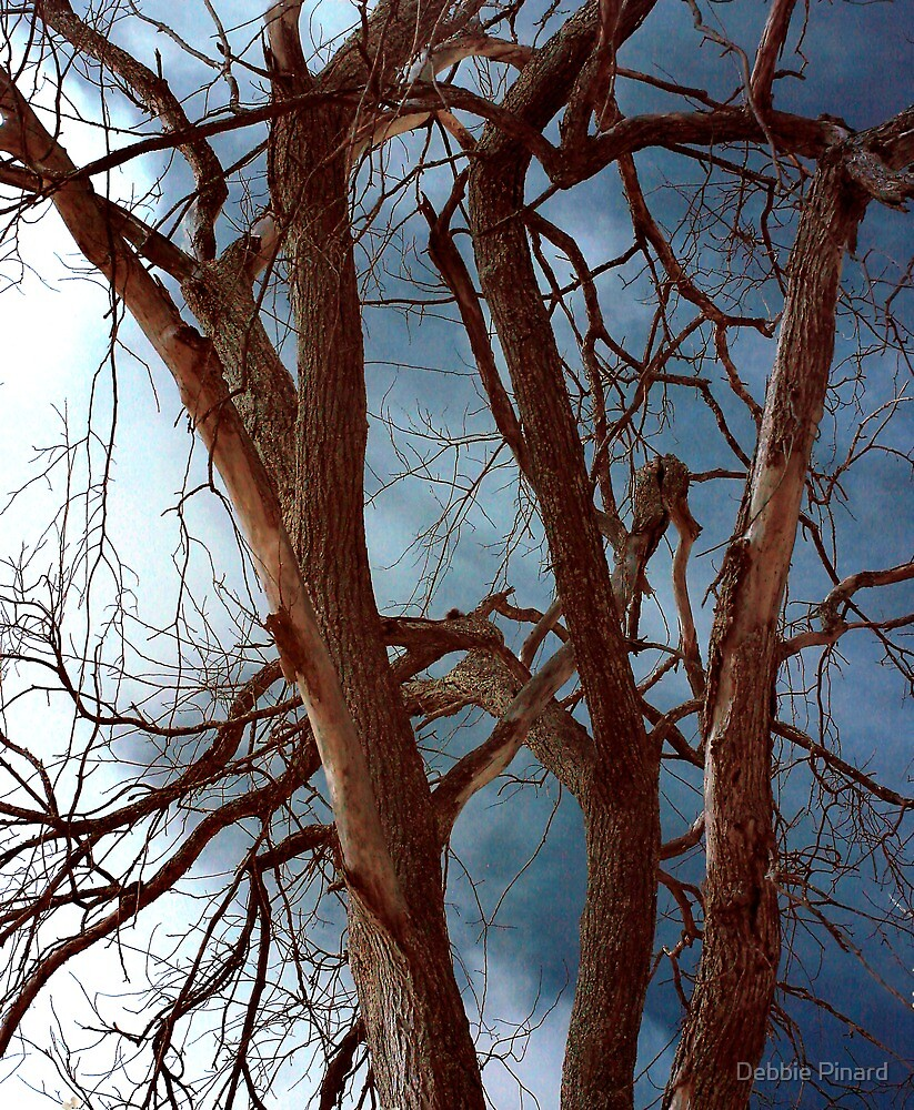 Dead Tree - Infrared by Debbie Pinard