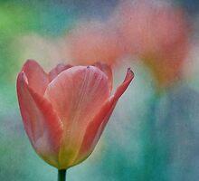Tulip III by Maria Ismanah Schulze-Vorberg