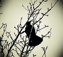 Crowmo by DoreenPhillips