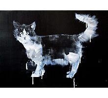 INTANGIBLE TO THE GRASP #cat Photographic Print