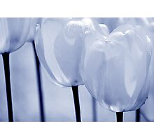 Tulips #2 Photographic Print