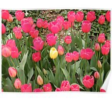 Colorful Spring Flowers, New York City Poster