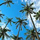 Reach for the Blue Sky - Palm Trees by DebbyTownsend