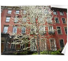 Colorful Spring Flowers, New York City, Gramercy Park Poster