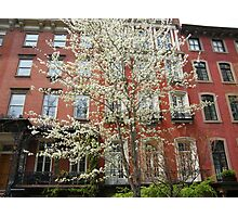 Colorful Spring Flowers, New York City, Gramercy Park Photographic Print