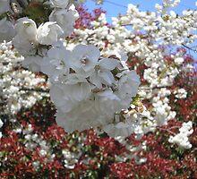 Blooming Trees by AuntieBarbie