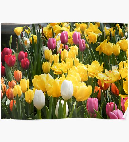 Spring Flowers, New York City Poster