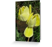 Raindrop Jewels on Sunshine Yellow Frilled Tulips  Greeting Card