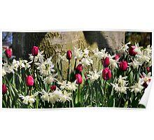 Spring blooms - Mount Vernon, Washington Poster