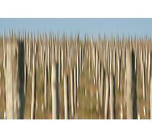 Winery Poles Photographic Print