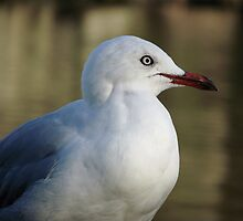Seagull by the river by waxyfrog