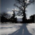 Winter Shadows by Marzena Grabczynska Lorenc