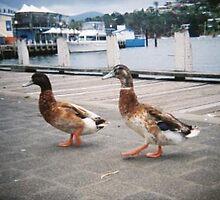 Holga Harbor - Duck Walk - Tasmania, Australia by kirstygirl7