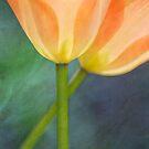 Tulip I by Maria Ismanah Schulze-Vorberg