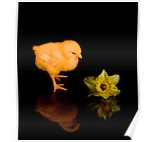 Easter Chick and Daffodil reflected Poster