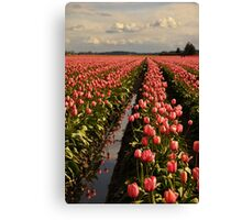 Pink Pink Canvas Print