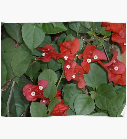 bright red flowers happily dancing together Poster