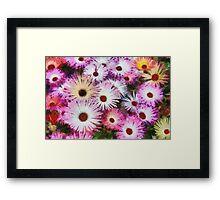 Colourful Dasies Framed Print