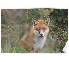 British Wildlife Centre Poster