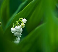 Flower power by Nigrita