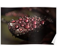 Nature's Bling II ~ Poster
