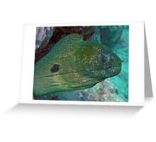 Moray eel after octopus meal  Greeting Card