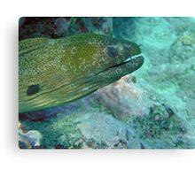 Moray eel Canvas Print