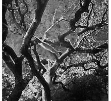 New Orleans Crepe Myrtles 2 Photographic Print