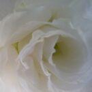 White heart by DEB CAMERON