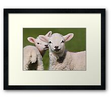 Looking on Framed Print