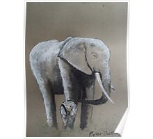 Elephant and calf. Poster