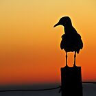 Sunset Seagull by pennyswork