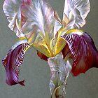 Flag Iris by Sarah Trett
